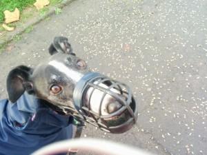 Chas muzzle